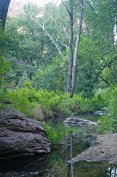 Gaan Canyon Vegetation